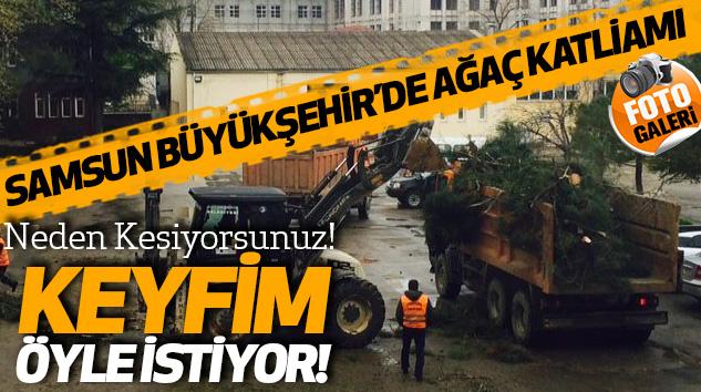 Samsun Büyükşehir'de Ağaç Katliamı