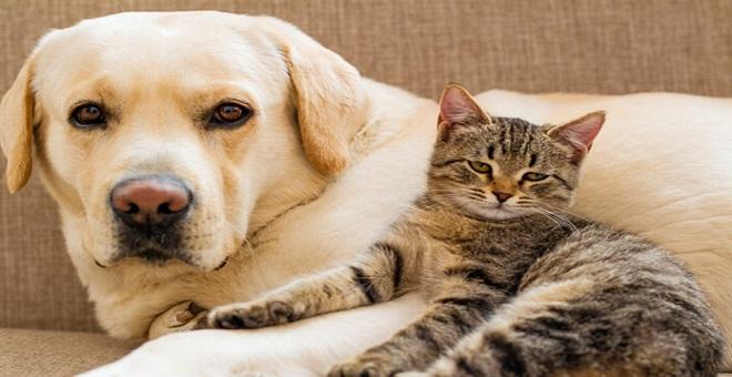 Acana Kedi ve Köpek Mamaları