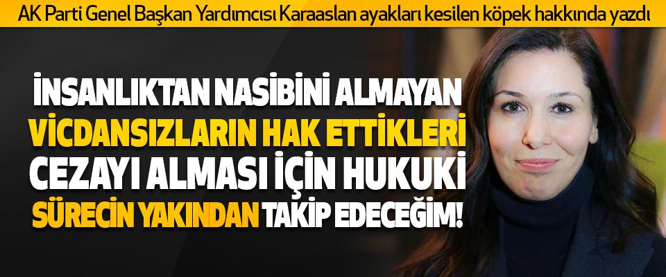 AK Parti Genel Başkan Yardımcısı Çiğdem Karaaslan ayakları Kesilen Köpek Hakkında Yazdı
