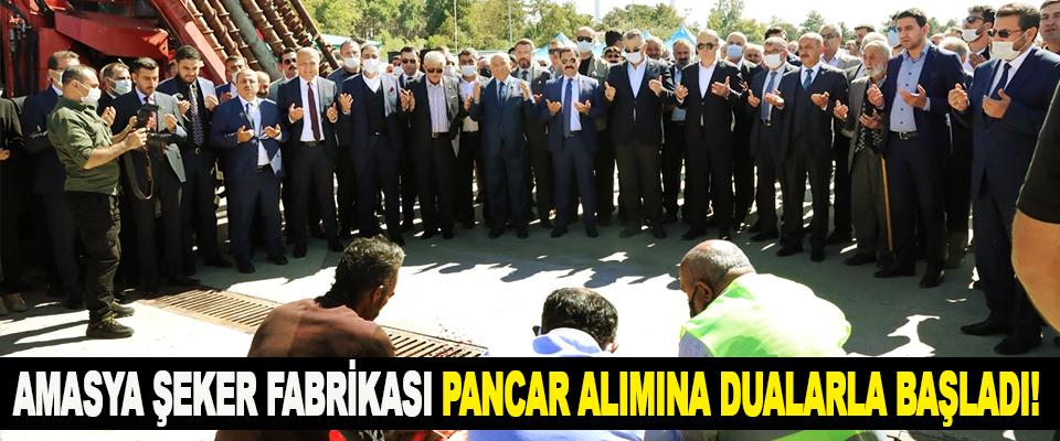 Amasya şeker fabrikası pancar alımına dualarla başladı!