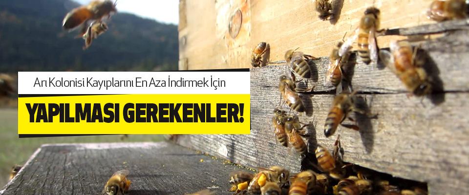 Arı Kolonisi Kayıplarını En Aza İndirmek İçin Yapılması Gerekenler!