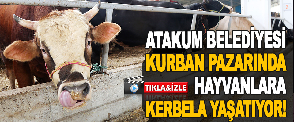 Atakum Belediyesi Kurban Pazarında Hayvanlara Kerbela Yaşatıyor!