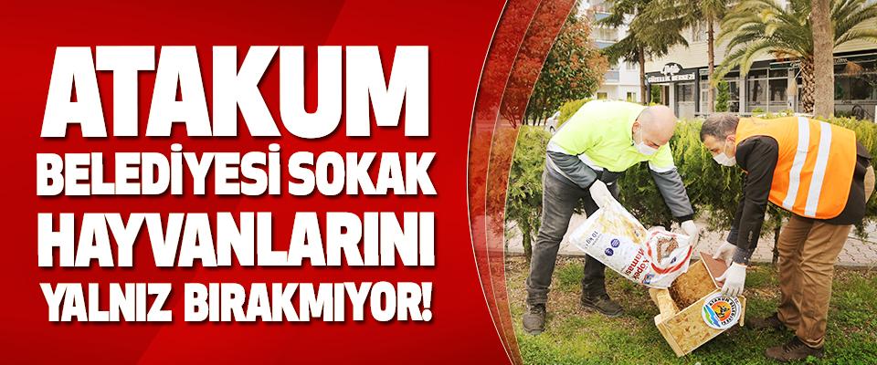 Atakum Belediyesi Sokak Hayvanlarını Yalnız Bırakmıyor!