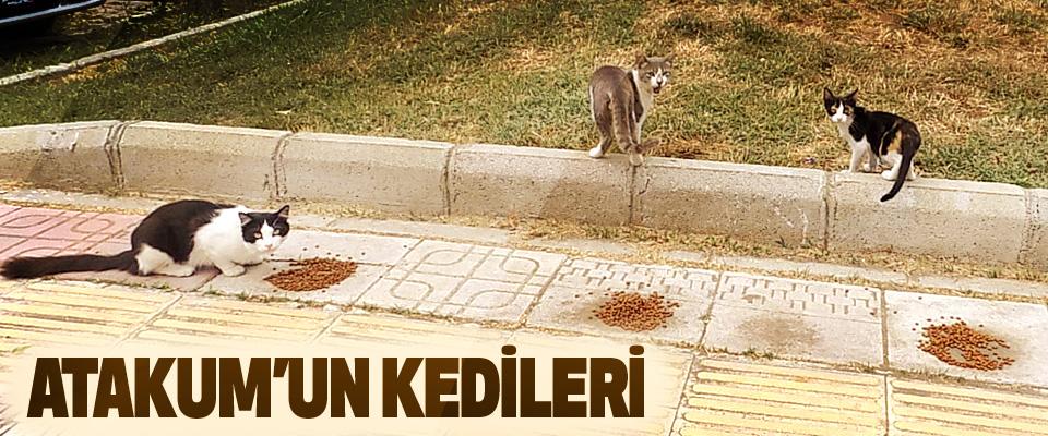 Atakum'un Kedileri