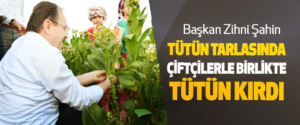 Başkan Zihni Şahin Tütün Tarlasında Çiftçilerle Birlikte Tütün Kırdı