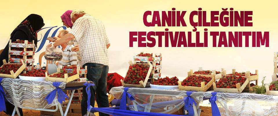 Canik Çileğine Festivalli Tanıtım