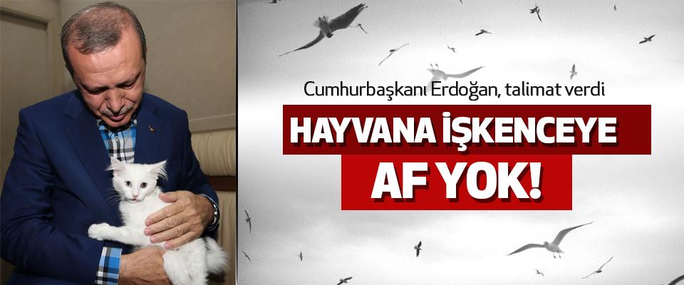 Cumhurbaşkanı Erdoğan, Talimat Verdi Hayvana İşkenceye Af Yok!
