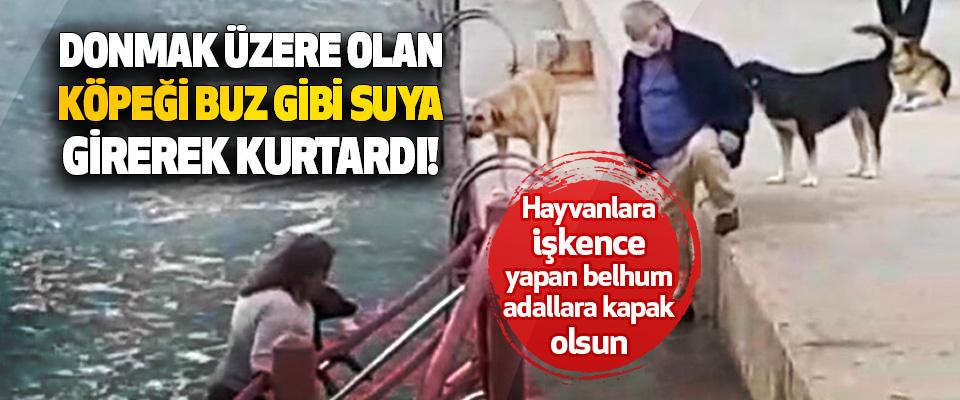 Donmak Üzere Olan Köpeği Buz Gibi Suya Girerek Kurtardı!