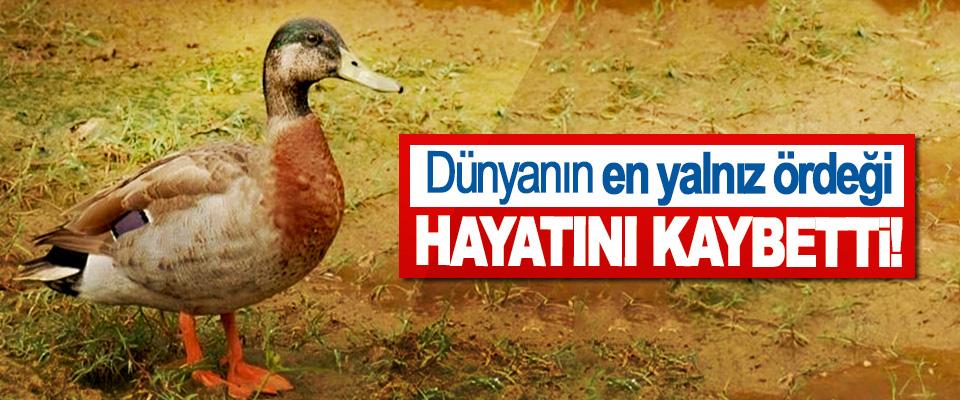 Dünyanın en yalnız ördeği Hayatını Kaybetti!