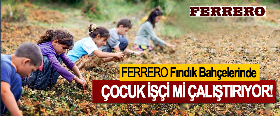 Ferrero Fındık Bahçelerinde Çocuk işçi mi çalıştırıyor!