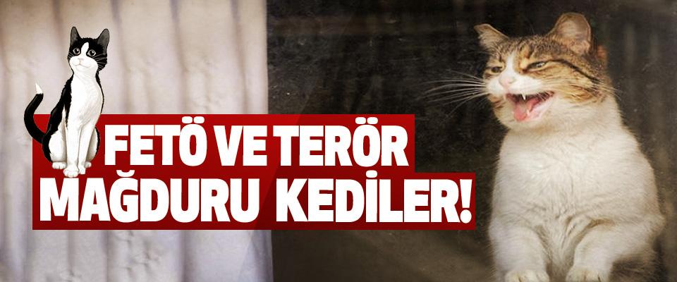 FETÖ Ve Terör Mağduru Kediler!