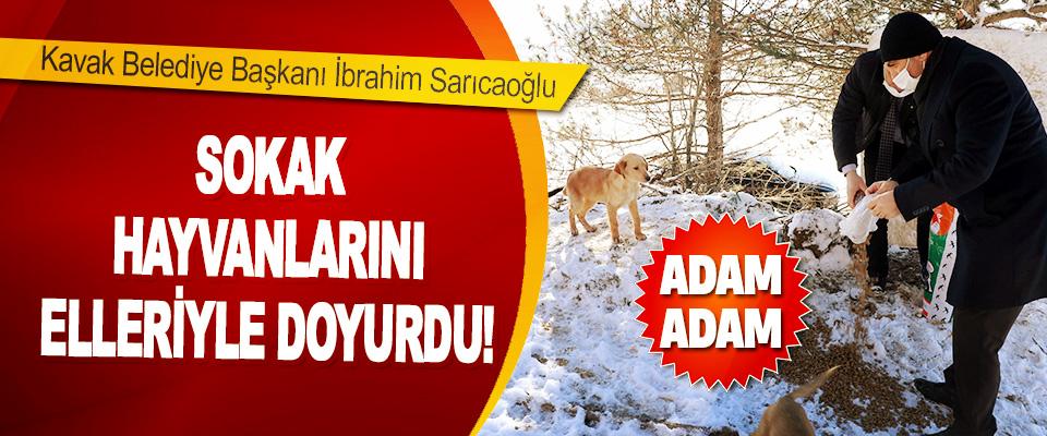 Kavak Belediye Başkanı İbrahim Sarıcaoğlu Sokak Hayvanlarını Elleriyle Doyurdu!