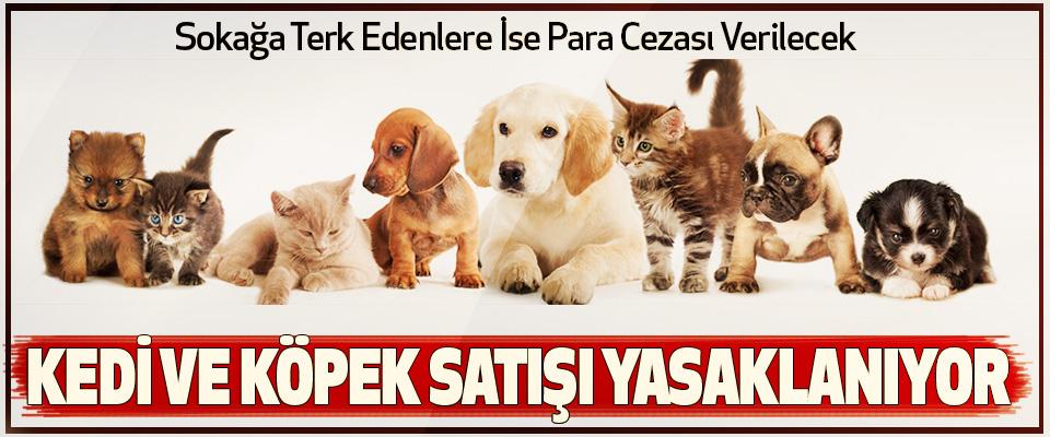 kedi ve köpek satışı yasaklanıyor sokağa terk edenlere ise para cezası verilecek