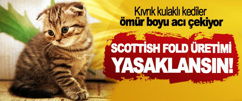 Kıvrık kulaklı kediler ömür boyu acı çekiyor,  Scottish Fold üretimi yasaklansın!