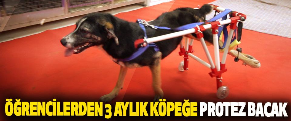 Öğrencilerden 3 Aylık Köpeğe Protez Bacak