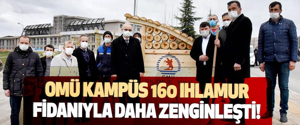 OMÜ Kampüs 160 Ihlamur Fidanıyla Daha Zenginleşti!