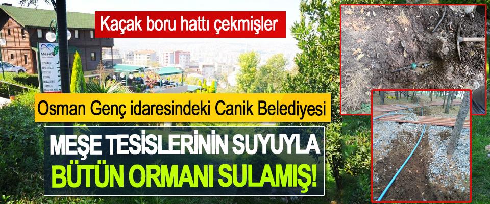 Osman Genç idaresindeki Canik Belediyesi Meşe tesislerinin suyuyla bütün ormanı sulamış!