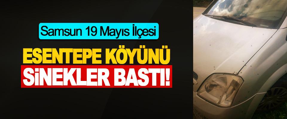 Samsun 19 Mayıs İlçesi Esentepe köyünü sinekler bastı!