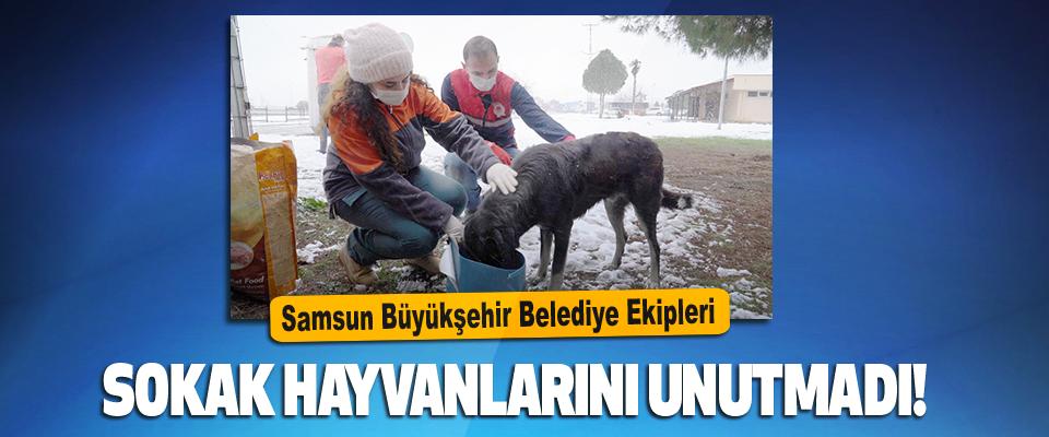 Samsun Büyükşehir Belediye Ekipleri Hayvanları Unutmadı!