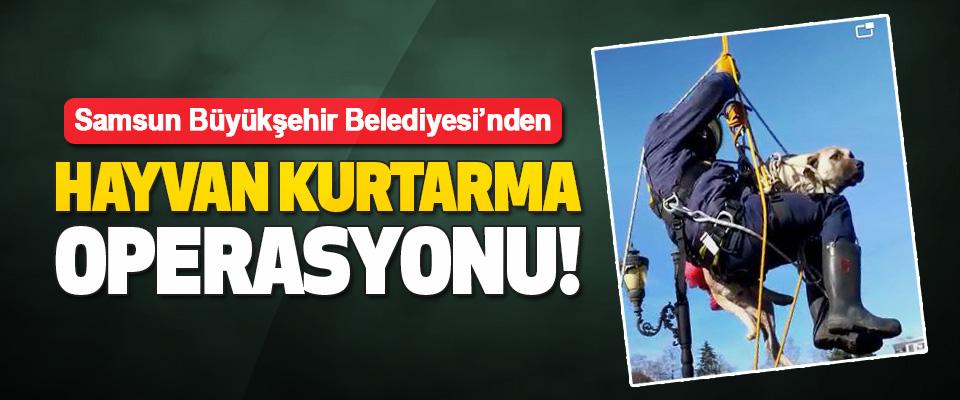 Samsun Büyükşehir Belediyesi'nden Hayvan Kurtarma Operasyonu!