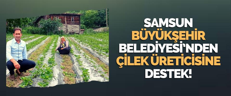 Samsun Büyükşehir Belediyesi'nden Çilek Üreticisine Destek!