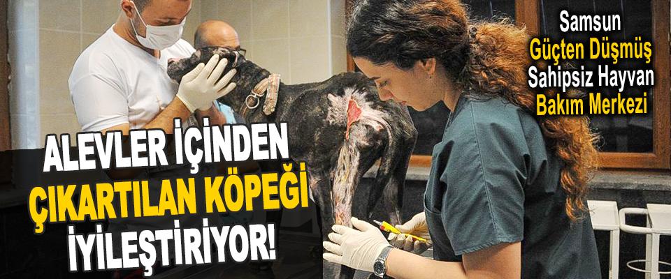 Samsun Güçten Düşmüş Sahipsiz Hayvan Bakım Merkezi Alevler İçinden Çıkartılan Köpeği İyileştiriyor!