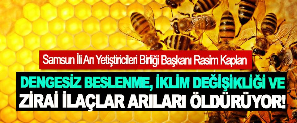 Samsun İli Arı Yetiştiricileri Birliği Başkanı Rasim Kaplan: Dengesiz beslenme, iklim değişikliği ve zirai ilaçlar arıları öldürüyor!