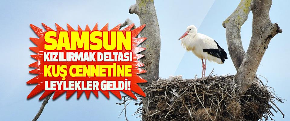 Samsun Kızılırmak Deltası Kuş Cennetine Leylekler Geldi!
