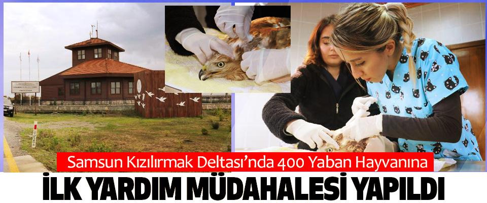 Samsun Kızılırmak Deltası'nda 400 Yaban Hayvanına İlk Yardım Müdahalesi Yapıldı