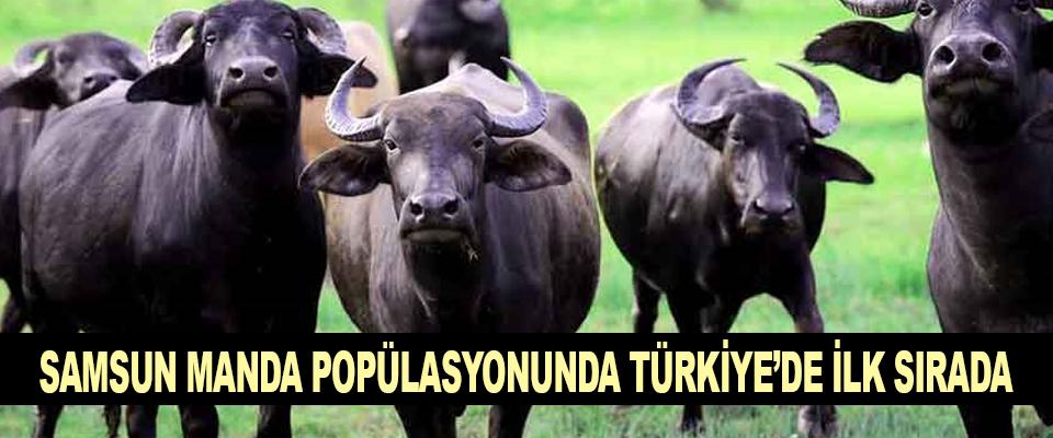 Samsun Manda popülasyonunda Türkiye'de ilk sırada