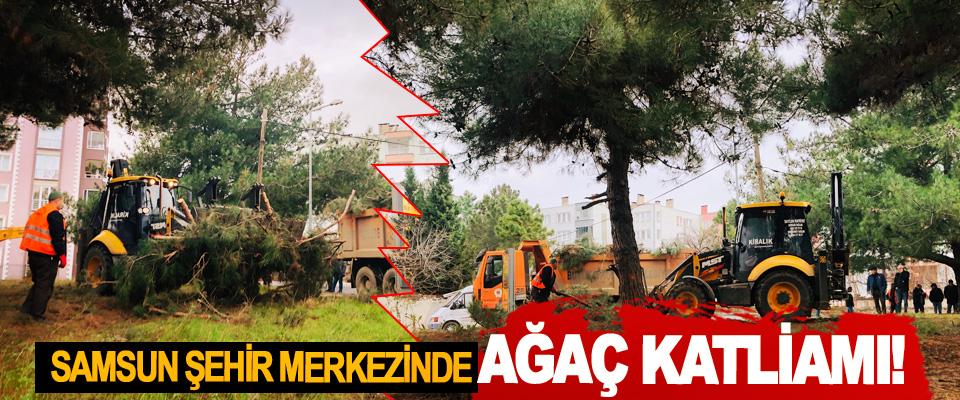 Samsun şehir merkezinde ağaç katliamı!