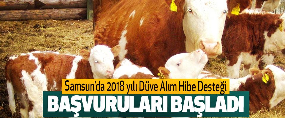 Samsun'da 2018 yılı Düve Alım Hibe Desteği Başvuruları Başladı