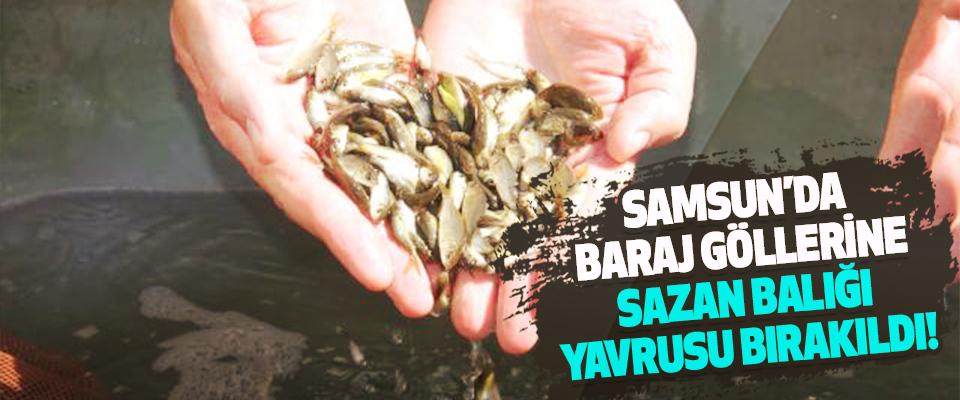 Samsun'da baraj göllerine sazan balığı yavrusu bırakıldı!