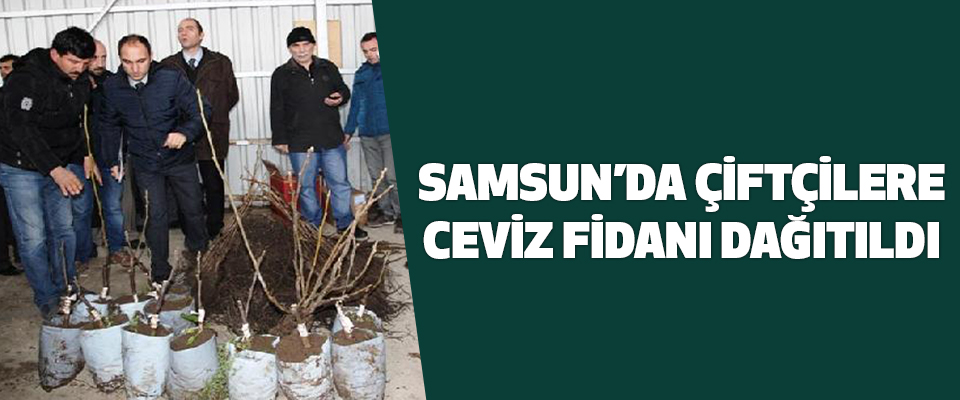 Samsun'da Çiftçilere 1500 adet ceviz fidanı dağıtıldı