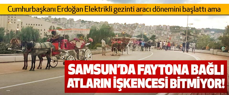 Samsun'da faytona bağlı atların işkencesi bitmiyor!