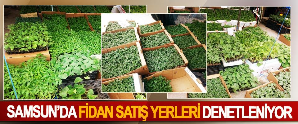 Samsun'da Fidan Satış Yerleri Denetleniyor