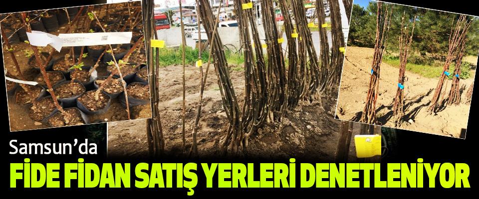 Samsun'da Fide Fidan Satış Yerleri Denetleniyor