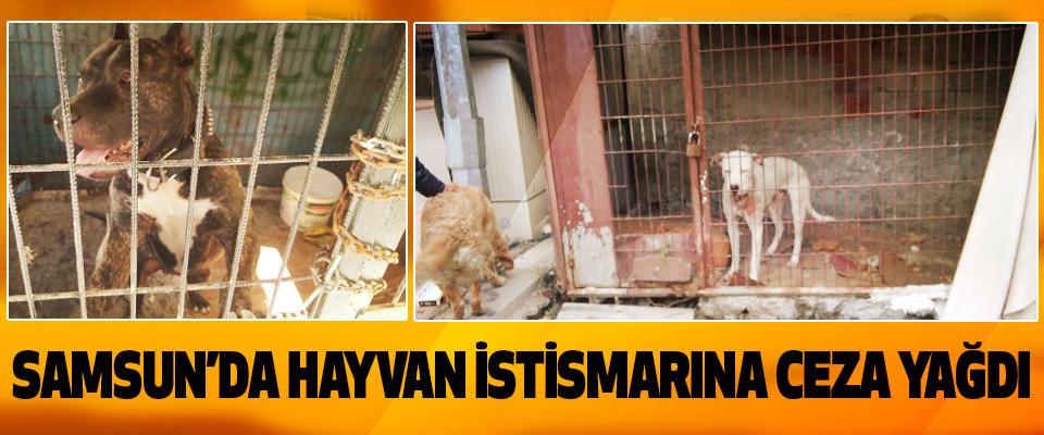Samsun'da Hayvan İstismarına Ceza Yağdı