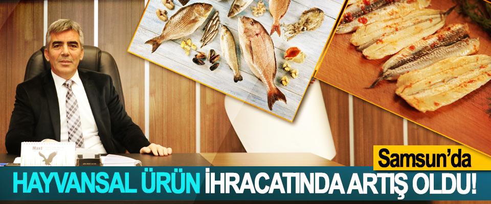 Samsun'da hayvansal ürün ihracatında artış oldu!