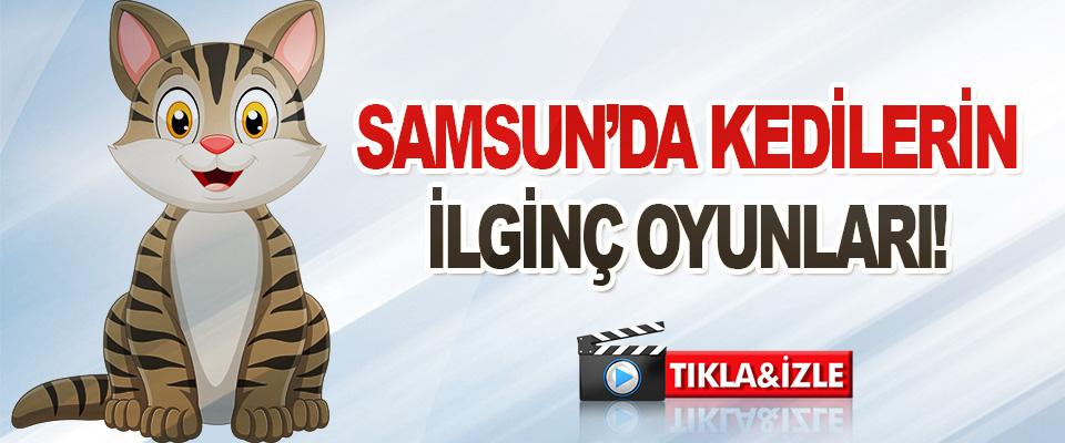 Samsun'da Kedilerin İlginç Oyunları!