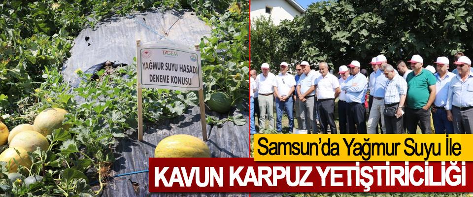 Samsun'da Yağmur Suyu İle Kavun Karpuz Yetiştiriciliği