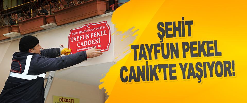 Şehit Tayfun Pekel Canik'te Yaşıyor!