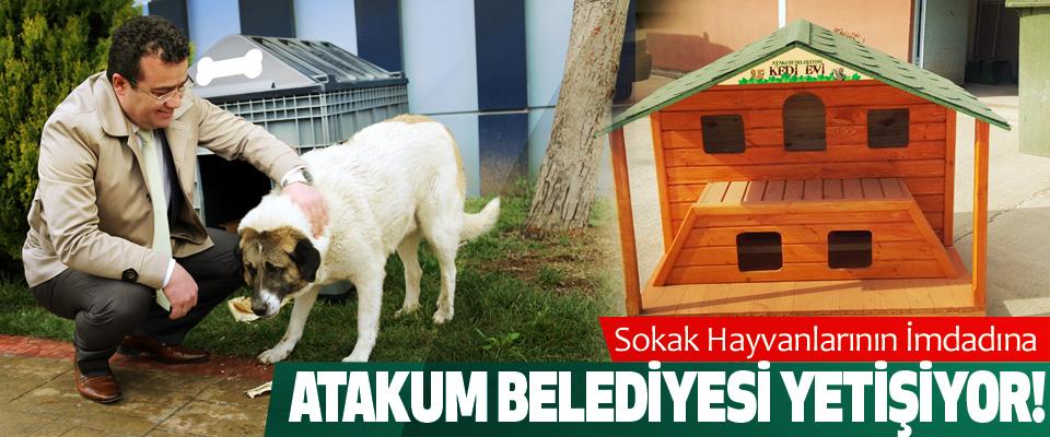 Sokak Hayvanlarının İmdadına Atakum Belediyesi Yetişiyor!