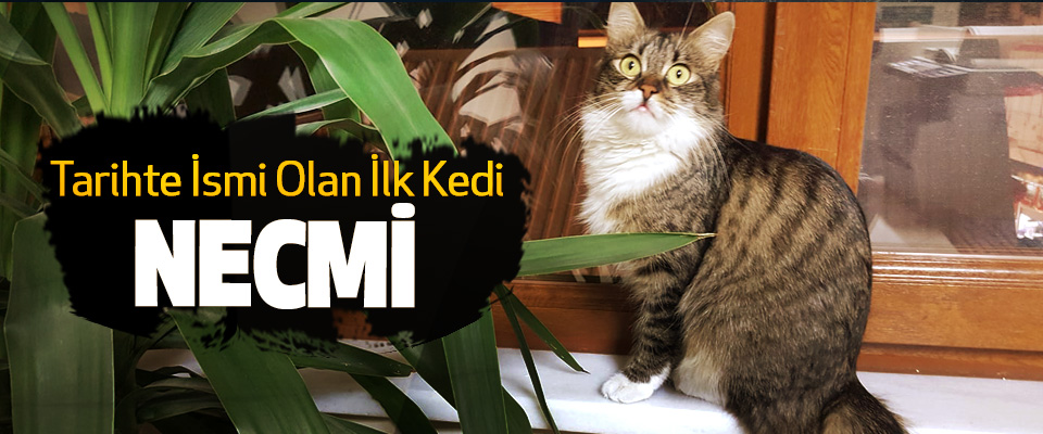 Tarihte İsmi Olan İlk Kedi Necmi!
