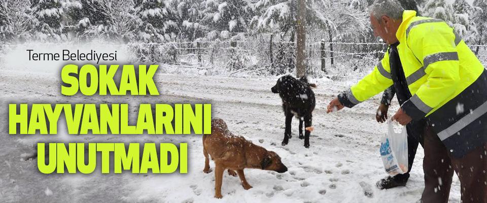 Terme Belediyesi sokak hayvanlarını unutmadı