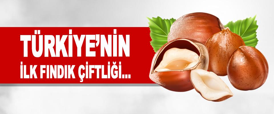 Türkiye'nin İlk Fındık Çiftliği…