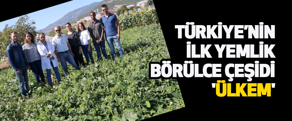 Türkiye'nin İlk Yemlik Börülce Çeşidi 'ÜLKEM'