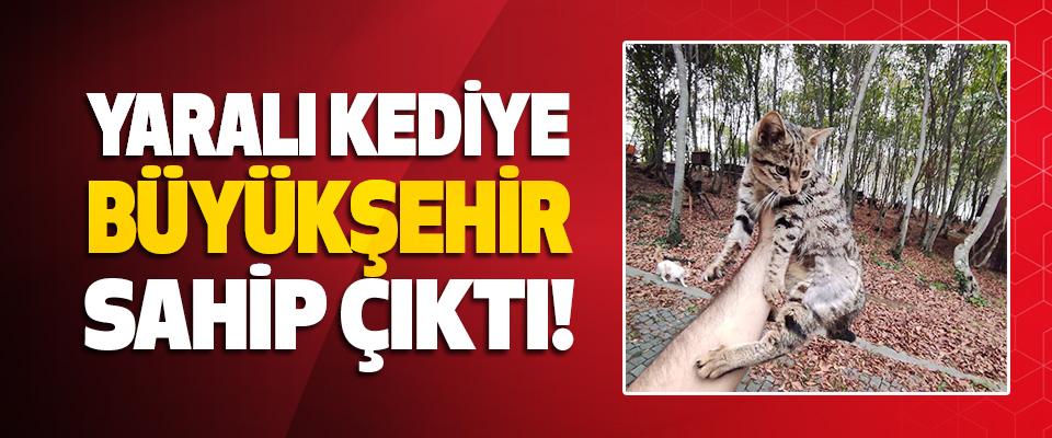 Yaralı Kediye, Büyükşehir Sahip Çıktı!