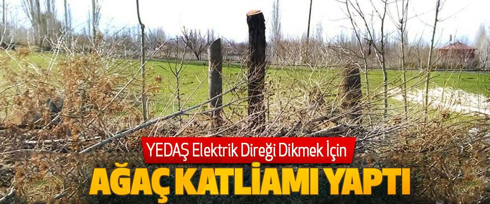 YEDAŞ Elektrik Direği Dikmek İçin Ağaç Katliamı Yaptı