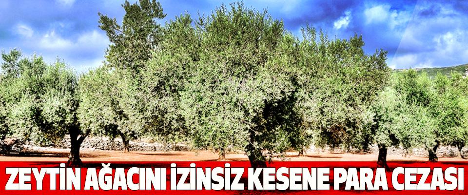 Zeytin Ağacını İzinsiz Kesene Para Cezası